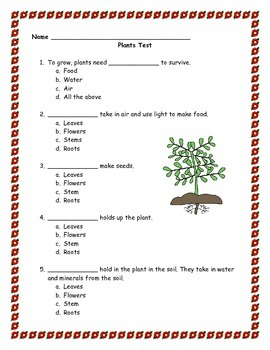 Plant Life Cycle Test & Answer Key