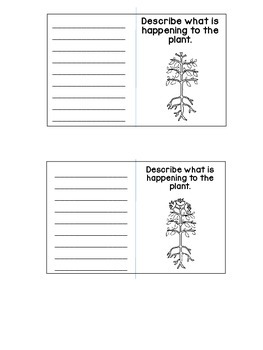 Plant Life Cycle Trading Cards