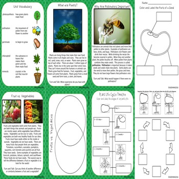 Plant Life Cycle Unit and Interactive Notebook