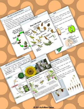 Plant Life Cycle : Unit with worksheets