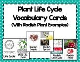 Plant Life Cycle Vocabulary Cards {Radish}