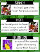 Plant Life Cycle Vocabulary Pack - Life Science Series