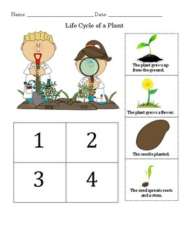 plant life cycle worksheet by miss robinson 39 s fab first tpt. Black Bedroom Furniture Sets. Home Design Ideas
