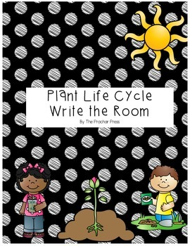 Plant Life Cycle Write The Rom Center