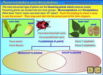 Plant Life Cycle - a SmartBoard/Interactive Whiteboard lesson.