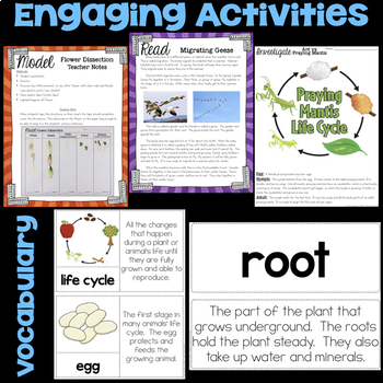 Plant Life Cycle and Animal Life Cycle Science Stations
