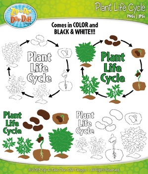 Plant Life Cycle and Life Stages Clipart Set — Comes In Color and Black & White!