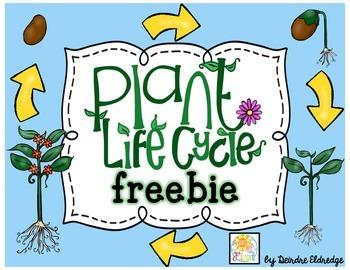 Plant Life Cycle {freebie}