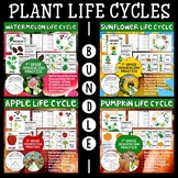 Plant Life Cycles Bundle