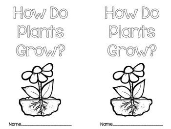 Plant Life Cycles Mini Unit (plant, bean, & sunflower)