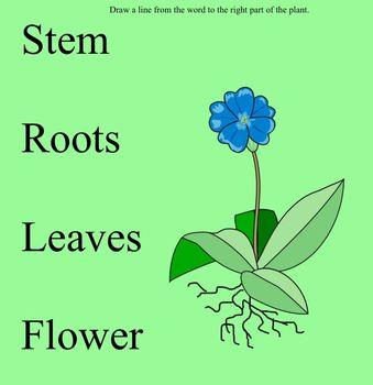 Plant Life basic