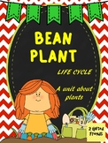 Plant Life Cycle - Bean