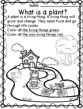 Plant Life Cycle - Bean