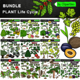Plant Life Cycles Clipart Bundle (Life Cycles Clipart by C