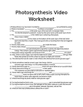 Plant Life in Action: Photosynthesis Video Worksheet