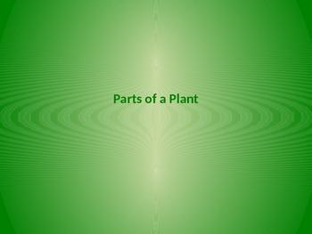 Plant Lifecycle