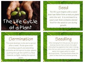 Plant Mini Unit