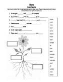 Plant Needs Quiz