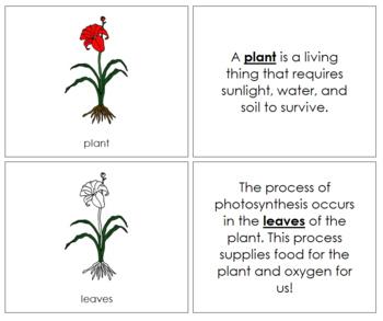 Plant Nomenclature Book
