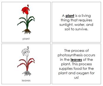 Plant Nomenclature Book (Red)