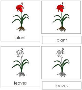Plant Nomenclature Cards