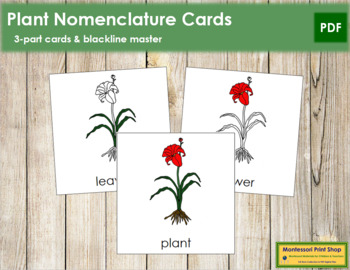 Plant Nomenclature Cards