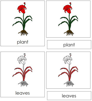 Plant Nomenclature Cards (Red)