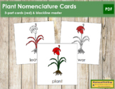 Plant Nomenclature Cards (Red)