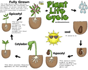 Plant Observation Book - Preschool, Kindergarten, 1st, 2nd, 3rd grade