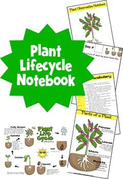 Plant Observation Book - Preschool, Kindergarten, 1st, 2nd