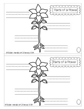 Plant Observation/Journal