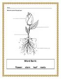 Plant Part Assessment