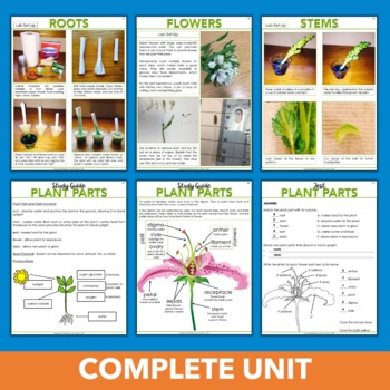 Plant Parts and Functions - Hands-on Botany Unit for Third, Fourth & Fifth Grade