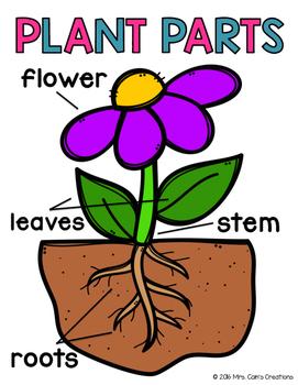 Plant Parts Activity Pack