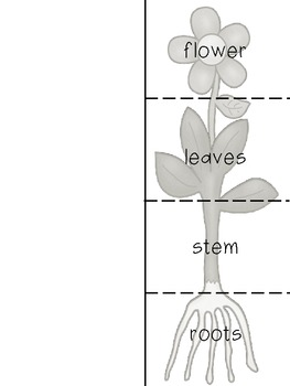 Plant Parts Aplenty