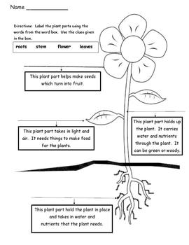 Plant Parts - Differentiated Instruction - Tiered Worksheets by ...