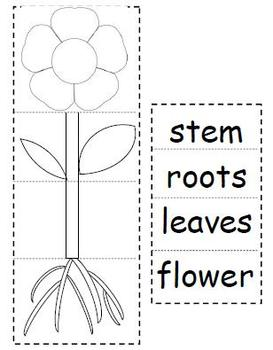 Plant Parts Flip Book by Courtney Quinlan | Teachers Pay Teachers