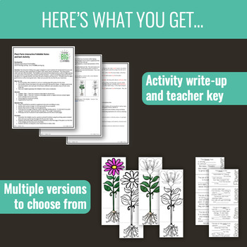Plant Parts Foldable: Interactive Notes Page