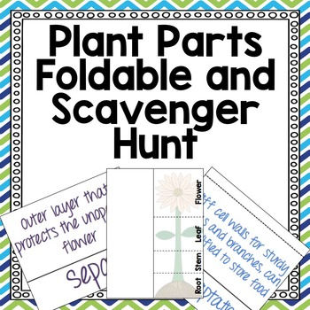Plant Parts Foldable and Vocabulary Activity