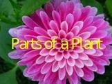 Plant Parts Kindergarten