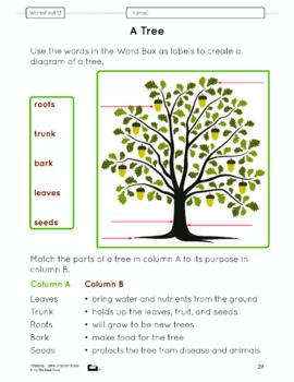 Plant Parts Lesson Plan Grade 3