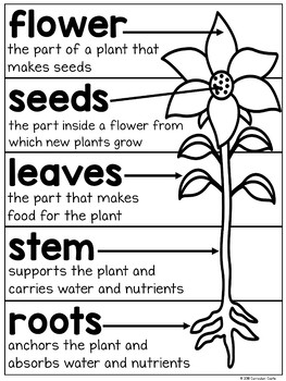 Plant Parts, Life Cycle & Needs Science Activities Folder BUNDLE