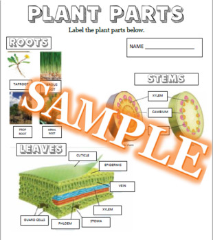 Plant Parts McGraw Hill