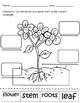 Plant Parts / Partes de una Planta - Dual Language English