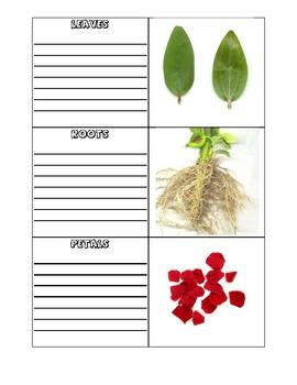 Plant Parts Photo Vocabulary Cards