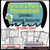 Plant Parts & Photosynthesis Doodle Notes   Science Doodles   Graphic Organizers