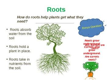 Plant Parts Powerpoint