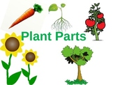 Plant Parts Powerpoint