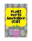Plant Parts Scavenger Hunt