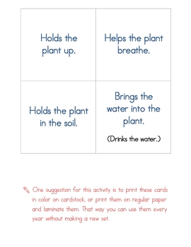 Plant Parts & Their Function Sort
